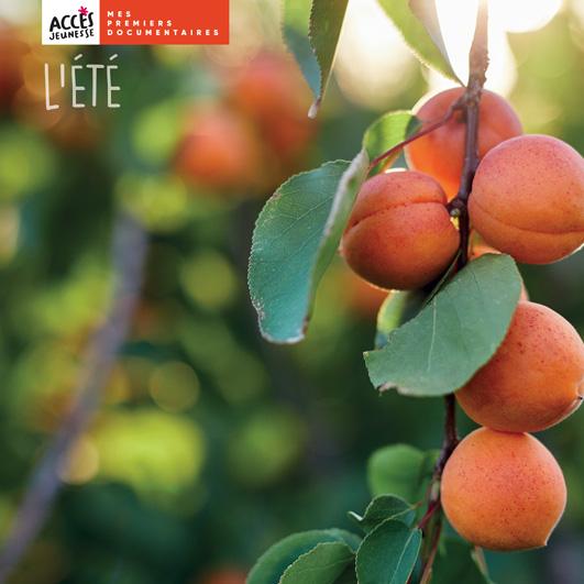 Couverture du livre photo L'été de la collection Mes premiers documentaires d'ACCÈS Jeunesse illustrée par une branche d'abricotier.