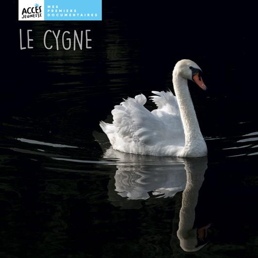 Couverture du livre photo Le cygne de la collection Mes premiers documentaires d'ACCÈS Jeunesse illustrée par une photo de cygne sur l'eau.