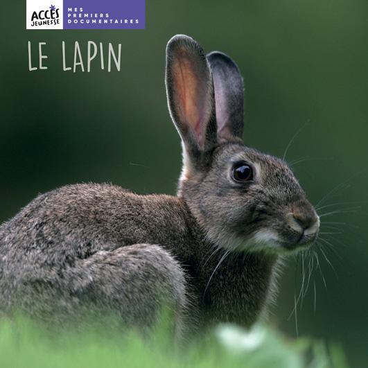 Couverture du livre photo Le lapin de la collection Mes premiers documentaires d'ACCÈS Jeunesse illustrée par une photo de lapin.